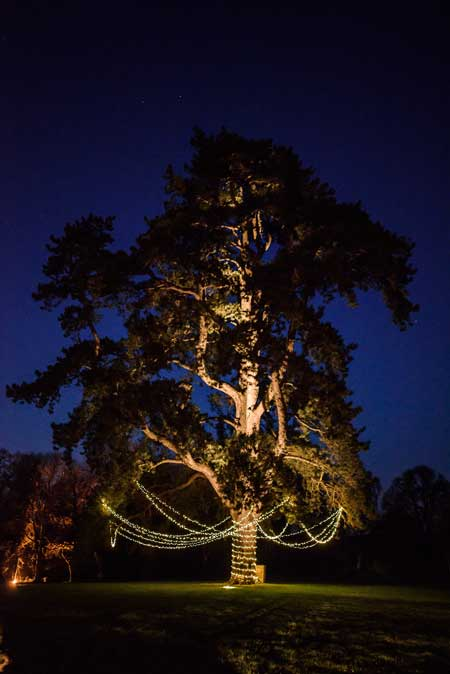 Image of a large tree with a fairy light canopy suspended from it.